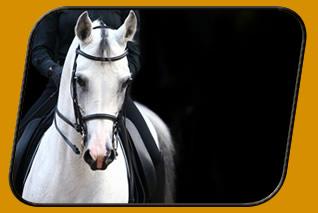 Balance zwischen Reiter und Pferd
